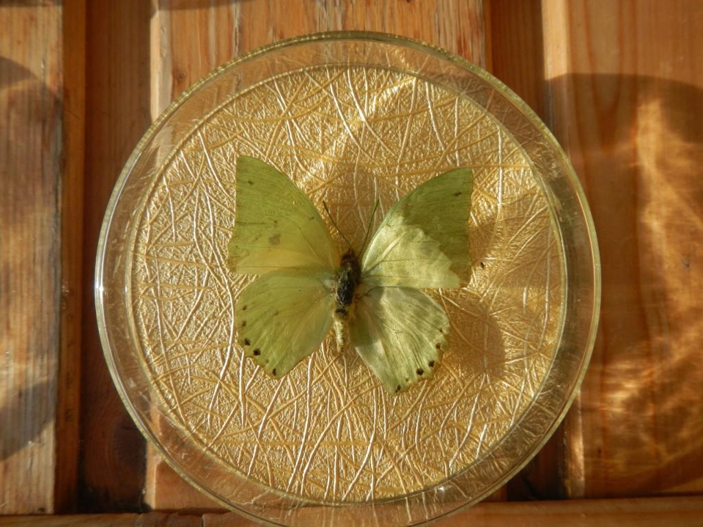 Бабочка в рамке № 1