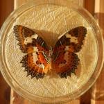 Бабочка в рамке № 10