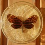 Бабочка в рамке № 11
