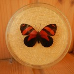 Бабочка в рамке № 12