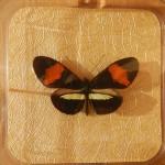Бабочка в рамке № 13