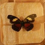 Бабочка в рамке № 14