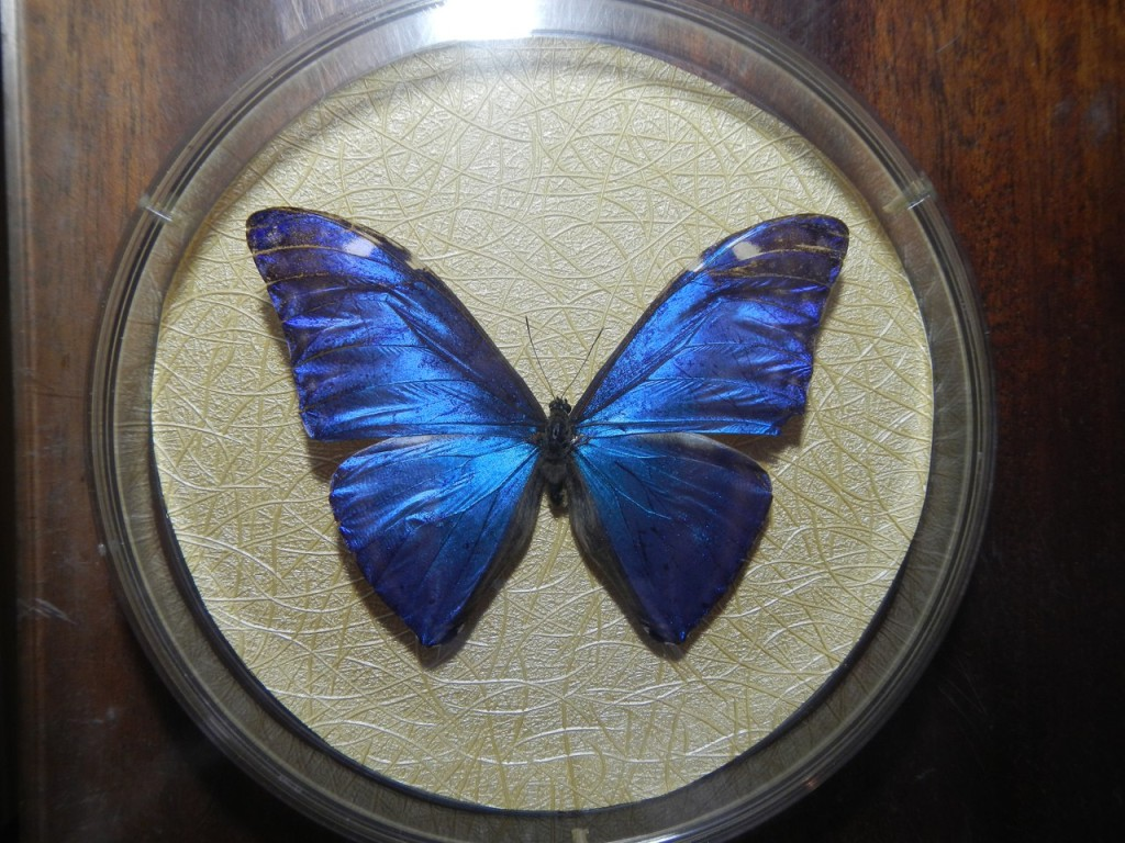 Сушеная бабочка