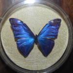 Бабочка в рамке № 15