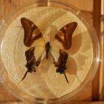 Бабочка в рамке № 16