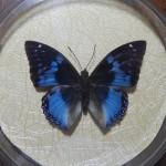 Бабочка в рамке № 17