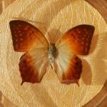 Бабочка в рамке № 18