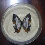 Бабочка в рамке № 2