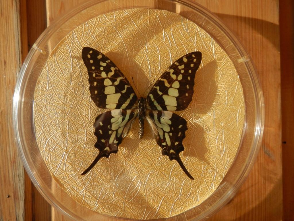 Коллекционная бабочка