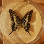 Бабочка в рамке № 20