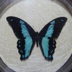 Бабочка в рамке № 21