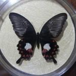 Бабочка в рамке № 22