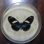 Бабочка в рамке № 3