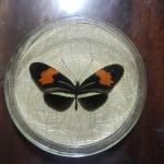Бабочка в рамке № 4