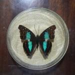 Бабочка в рамке № 5