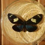 Бабочка в рамке № 6