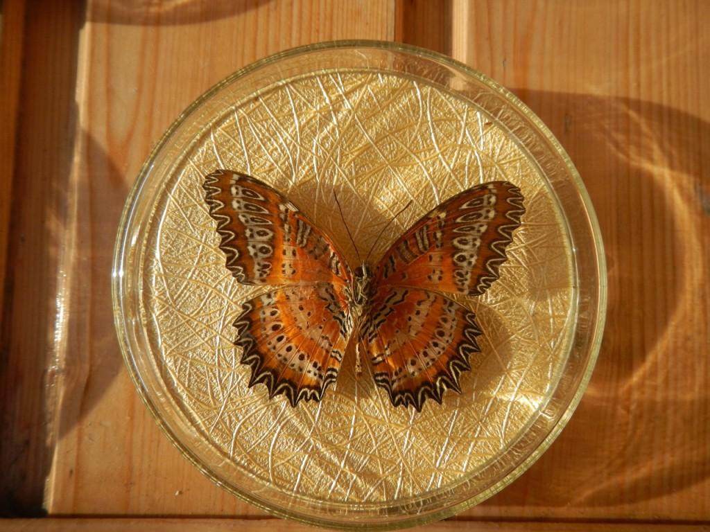 Бабочка в рамке № 7