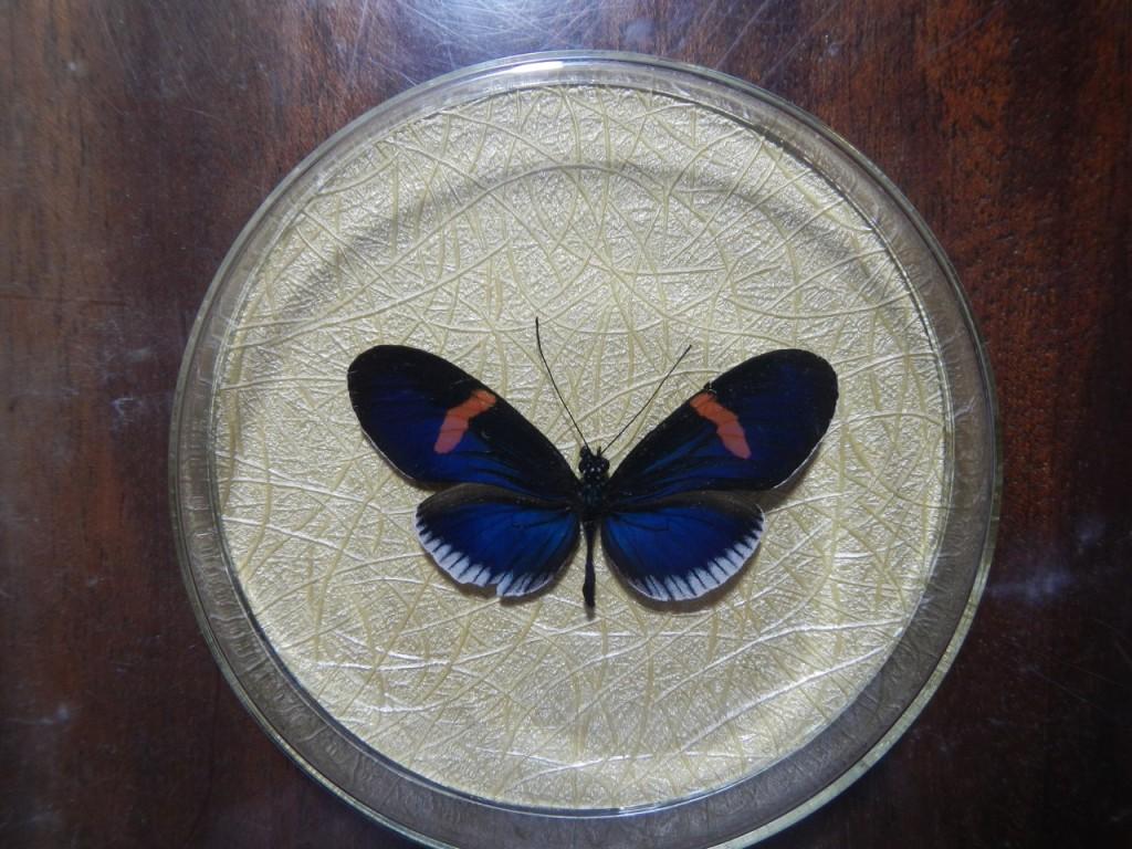 Бабочка в рамке № 8