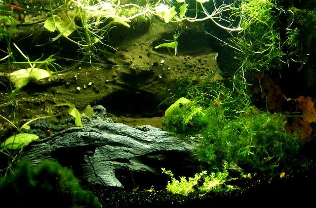 Аквариум с водными растениями