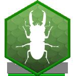 Аренда жуков