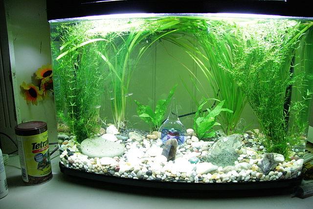 Пресноводный аквариум с растениями